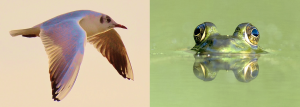 You need to know if you are a bird or a frog in business